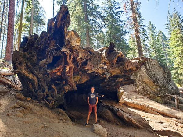 profiq výherce letenky do USA, Yosemitský Národní Park, sekvoje